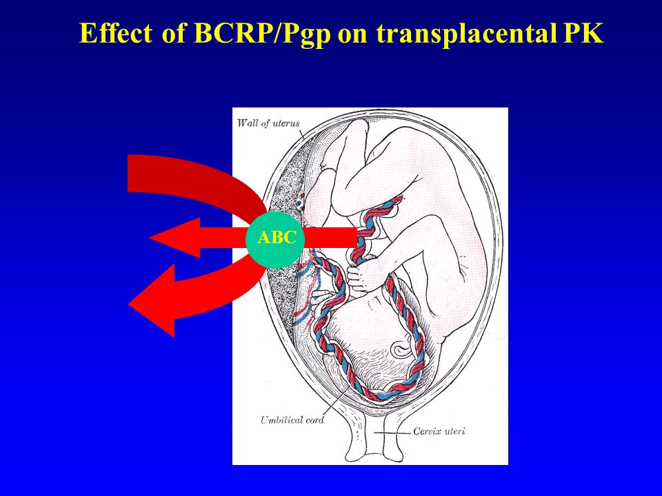 Effect of BCRP/Pgp on transplacental PK ABC