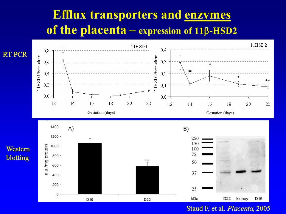 Conclusions Efflux transporters in the trophoblast can remove substrates from fetus to mother.