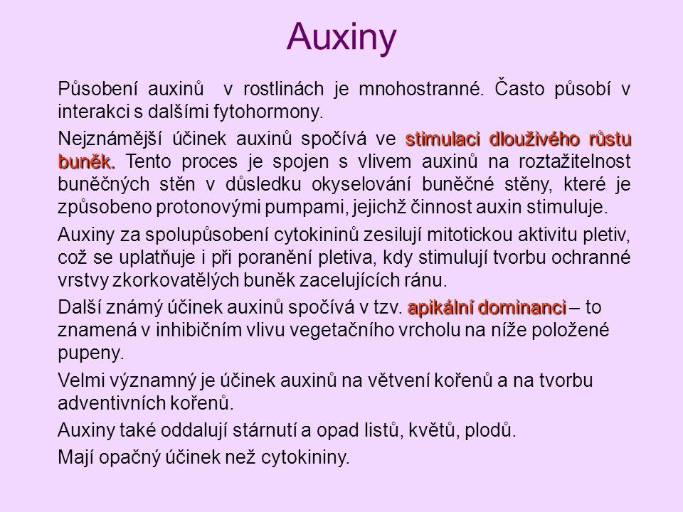 Auxiny Působení auxinů v rostlinách je mnohostranné. Často působí v interakci s dalšími fytohormony. stimulaci dlouživého růstu buněk. Nejznámější úči