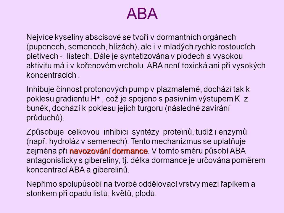 ABA Nejvíce kyseliny abscisové se tvoří v dormantních orgánech (pupenech, semenech, hlízách), ale i v mladých rychle rostoucích pletivech - listech. D