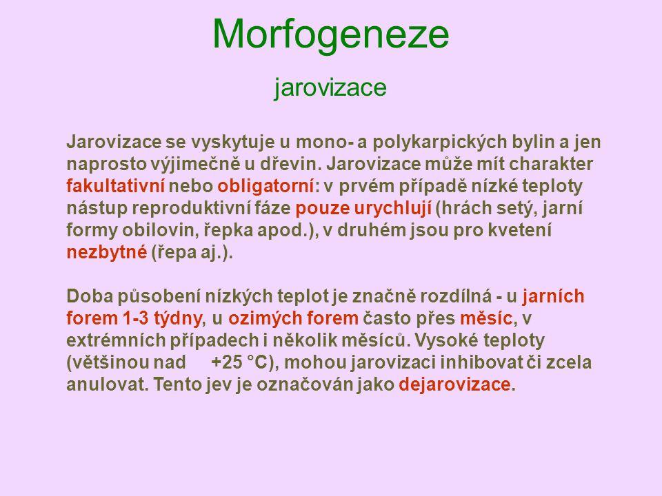 Morfogeneze jarovizace Jarovizace se vyskytuje u mono- a polykarpických bylin a jen naprosto výjimečně u dřevin. Jarovizace může mít charakter fakulta