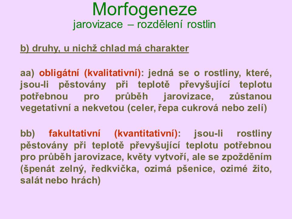 Morfogeneze jarovizace – rozdělení rostlin b) druhy, u nichž chlad má charakter aa) obligátní (kvalitativní): jedná se o rostliny, které, jsou-li pěst