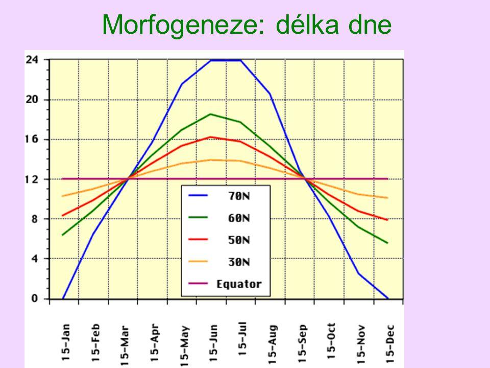 Morfogeneze: délka dne