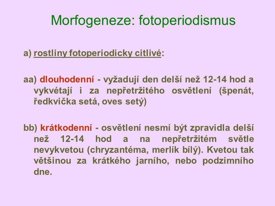Morfogeneze: fotoperiodismus a)rostliny fotoperiodicky citlivé: aa) dlouhodenní - vyžadují den delší než 12-14 hod a vykvétají i za nepřetržitého osvě