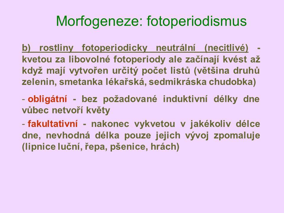 Morfogeneze: fotoperiodismus b) rostliny fotoperiodicky neutrální (necitlivé) - kvetou za libovolné fotoperiody ale začínají kvést až když mají vytvoř
