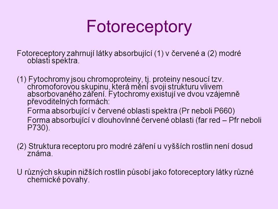 Fotoreceptory Fotoreceptory zahrnují látky absorbující (1) v červené a (2) modré oblasti spektra. (1) Fytochromy jsou chromoproteiny, tj. proteiny nes