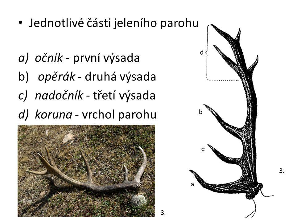 Jednotlivé části jeleního parohu a)očník - první výsada b) opěrák - druhá výsada c)nadočník - třetí výsada d)koruna - vrchol parohu 3. 8.