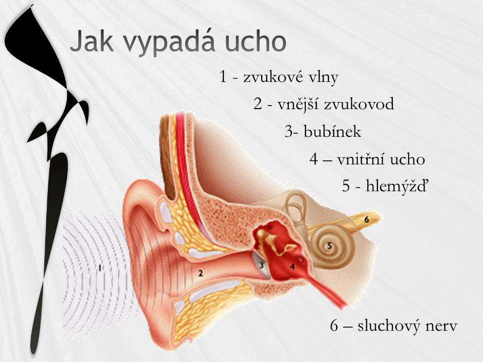 1 - zvukové vlny 2 - vnější zvukovod 3- bubínek 4 – vnitřní ucho 5 - hlemýžď 6 – sluchový nerv