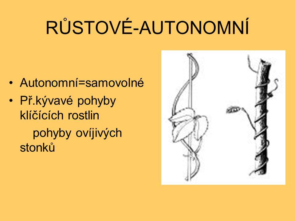 RŮSTOVÉ-AUTONOMNÍ Autonomní=samovolné Př.kývavé pohyby klíčících rostlin pohyby ovíjivých stonků