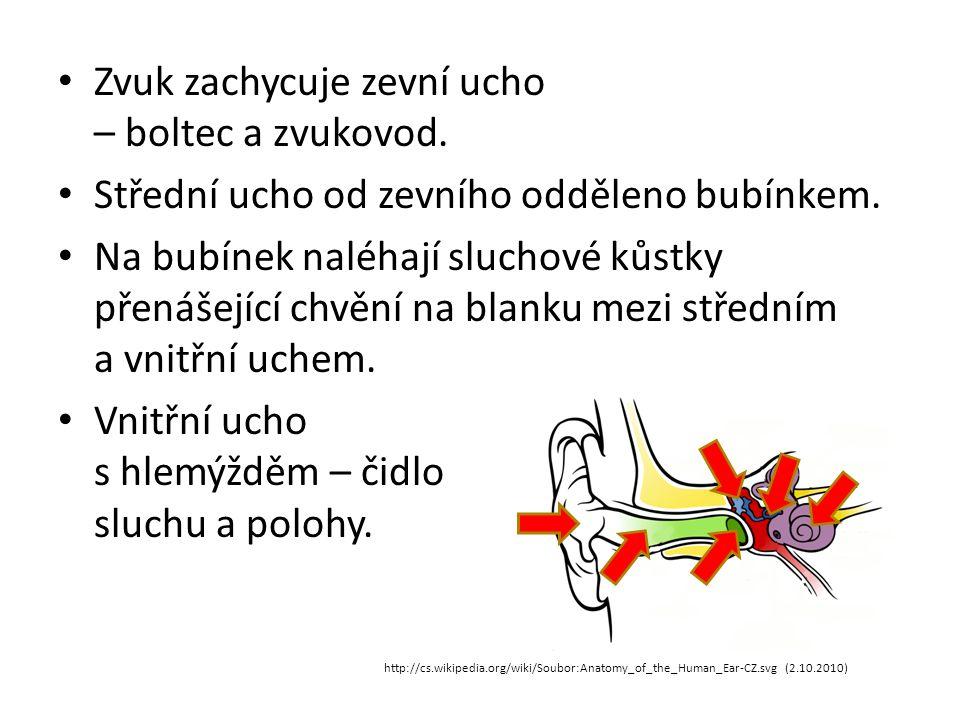 Zvuk zachycuje zevní ucho – boltec a zvukovod. Střední ucho od zevního odděleno bubínkem. Na bubínek naléhají sluchové kůstky přenášející chvění na bl