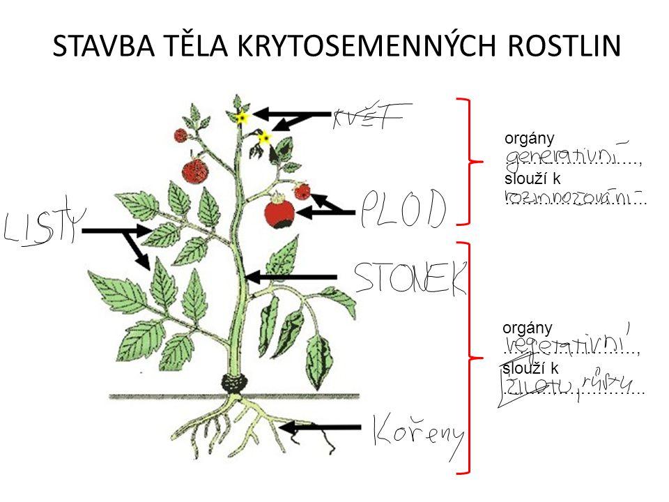 Kořen ………………… ……………… orgán, klíčí jako ……………., vždy směrem …………….