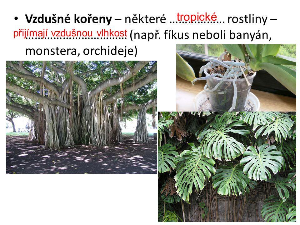 Příčepivé kořeny u ……………………. rostlin, k ……………………. (břečťan popínavý) popínavých přichycení