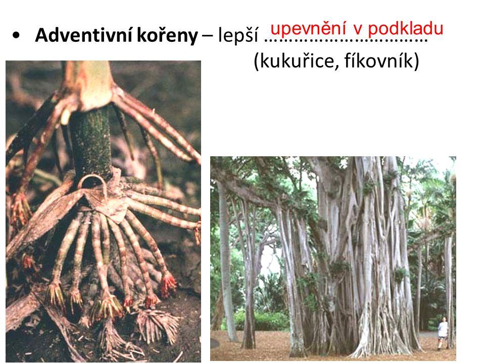 kyslíku Dýchací kořeny – příjem ……………… (mangrove)