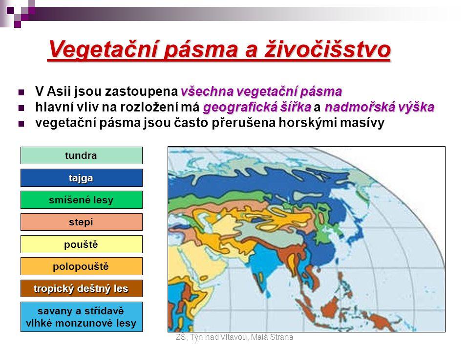 Pásma: mrazová poušť mrazová poušť (nejsevernější ostrovy) - mimořádně lišejníky - lední medvěd, mrož, tuleň tundra tundra (nejsevernější oblasti Asie) - mechy a lišejníky, zakrslé stromy - sob, polární liška tajga tajga (pás jehličnatých lesů, 70 0 -50 0 s.š.) - borovice, modřín… - medvěd, vlk, liška, jelen… pás smíšených lesů pás smíšených lesů (dnes vykáceno), v Asii jen málo pás stále zelených listnatých lesů pás stále zelených listnatých lesů (jen ve V Asii, Korea) ZŠ, Týn nad Vltavou, Malá Strana