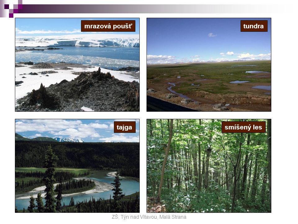 stepi stepi (ve střední Asii) - převládají trávy - hlodavci, králíci, ovce, koně - využívány jako pastviny pouště a polopouště pouště a polopouště (Arabský poloostrov, střední Asie) - život jen v oázách pás tropických lesů pás tropických lesů střídavě vlhké monzunové lesy 1) - střídavě vlhké monzunové lesy – (Přední a Zadní Indie) tropické deštné lesy 2) - tropické deštné lesy – (Sundy) - vzácná dřeva - kácení lesů, plantážní zemědělství (kaučukovník, kokos, rýže, cukrová třtina) - hmyz, ptáci, hadi, orangutan, slon indický, tygr ZŠ, Týn nad Vltavou, Malá Strana