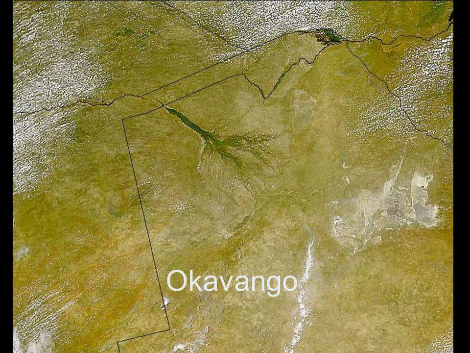 Okavango s buvoly