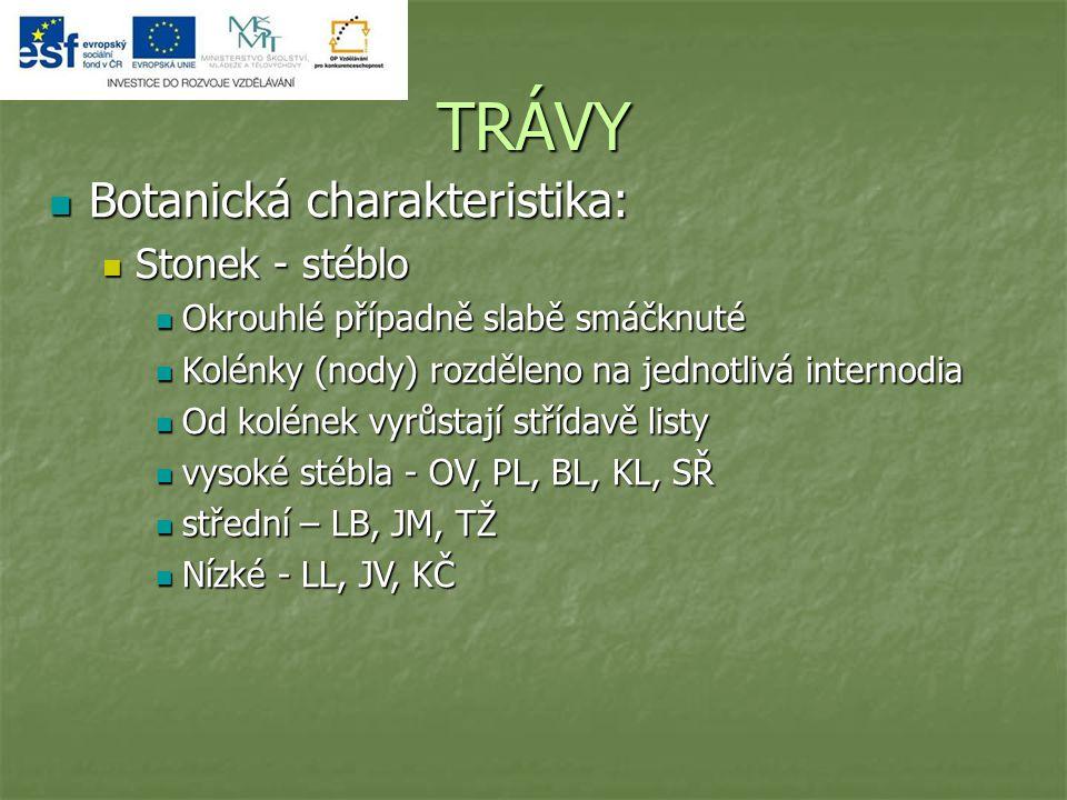 TRÁVY Botanická charakteristika: Botanická charakteristika: Stonek - stéblo Stonek - stéblo Okrouhlé případně slabě smáčknuté Okrouhlé případně slabě smáčknuté Kolénky (nody) rozděleno na jednotlivá internodia Kolénky (nody) rozděleno na jednotlivá internodia Od kolének vyrůstají střídavě listy Od kolének vyrůstají střídavě listy vysoké stébla - OV, PL, BL, KL, SŘ vysoké stébla - OV, PL, BL, KL, SŘ střední – LB, JM, TŽ střední – LB, JM, TŽ Nízké - LL, JV, KČ Nízké - LL, JV, KČ