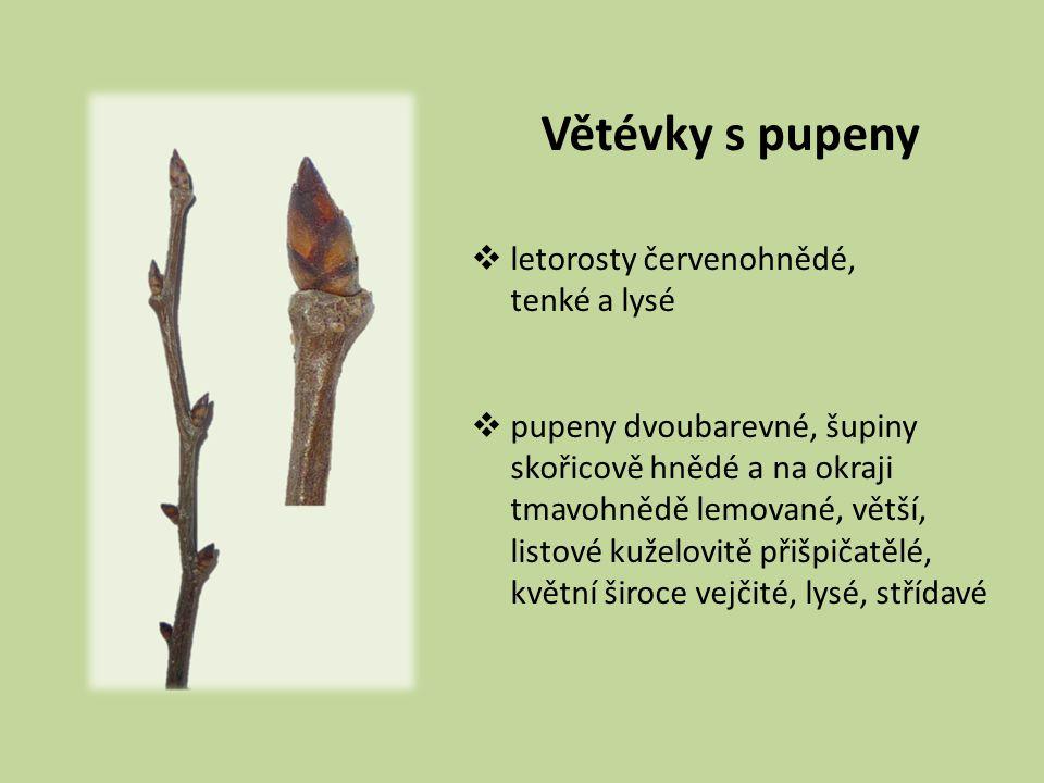 Listy  7–15 cm dl.