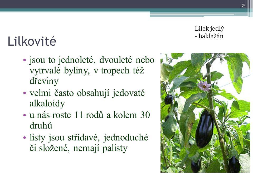 Lilkovité jsou to jednoleté, dvouleté nebo vytrvalé byliny, v tropech též dřeviny velmi často obsahují jedovaté alkaloidy u nás roste 11 rodů a kolem