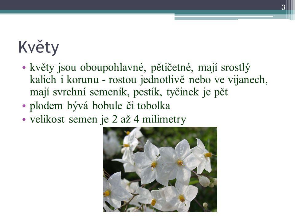 Květy květy jsou oboupohlavné, pětičetné, mají srostlý kalich i korunu - rostou jednotlivě nebo ve vijanech, mají svrchní semeník, pestík, tyčinek je