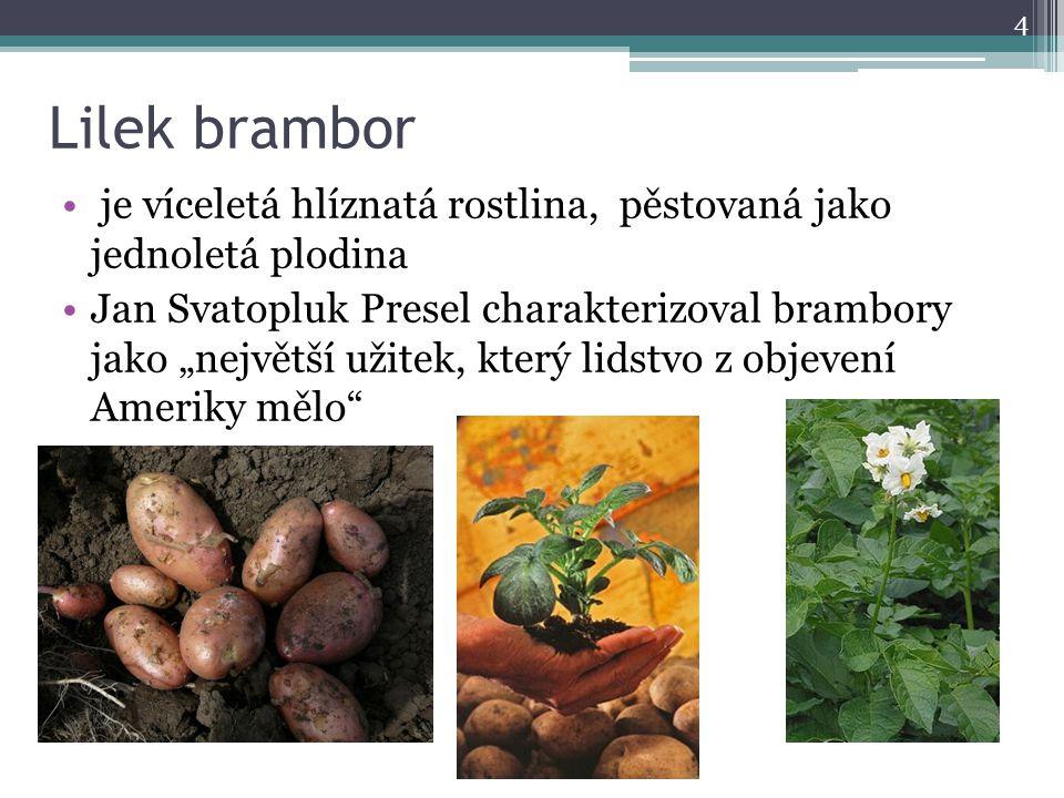"""Lilek brambor je víceletá hlíznatá rostlina, pěstovaná jako jednoletá plodina Jan Svatopluk Presel charakterizoval brambory jako """"největší užitek, kte"""