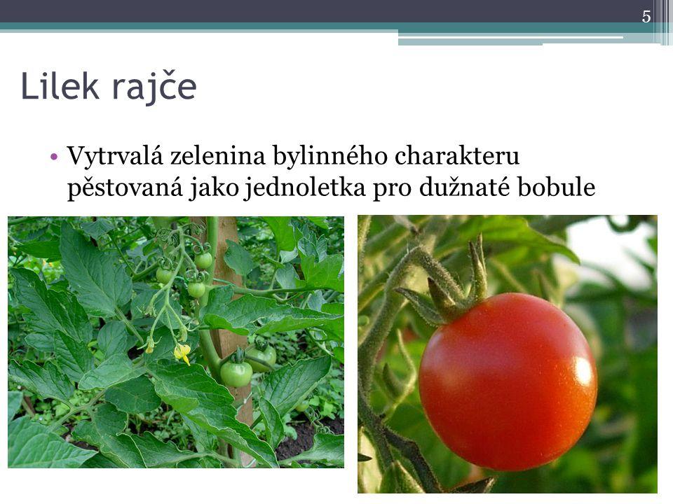 Lilek rajče Vytrvalá zelenina bylinného charakteru pěstovaná jako jednoletka pro dužnaté bobule 5