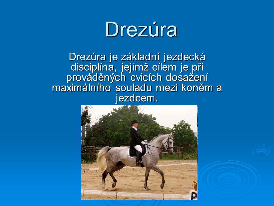 Drezúra Drezúra je základní jezdecká disciplína, jejímž cílem je při prováděných cvicích dosažení maximálního souladu mezi koněm a jezdcem.