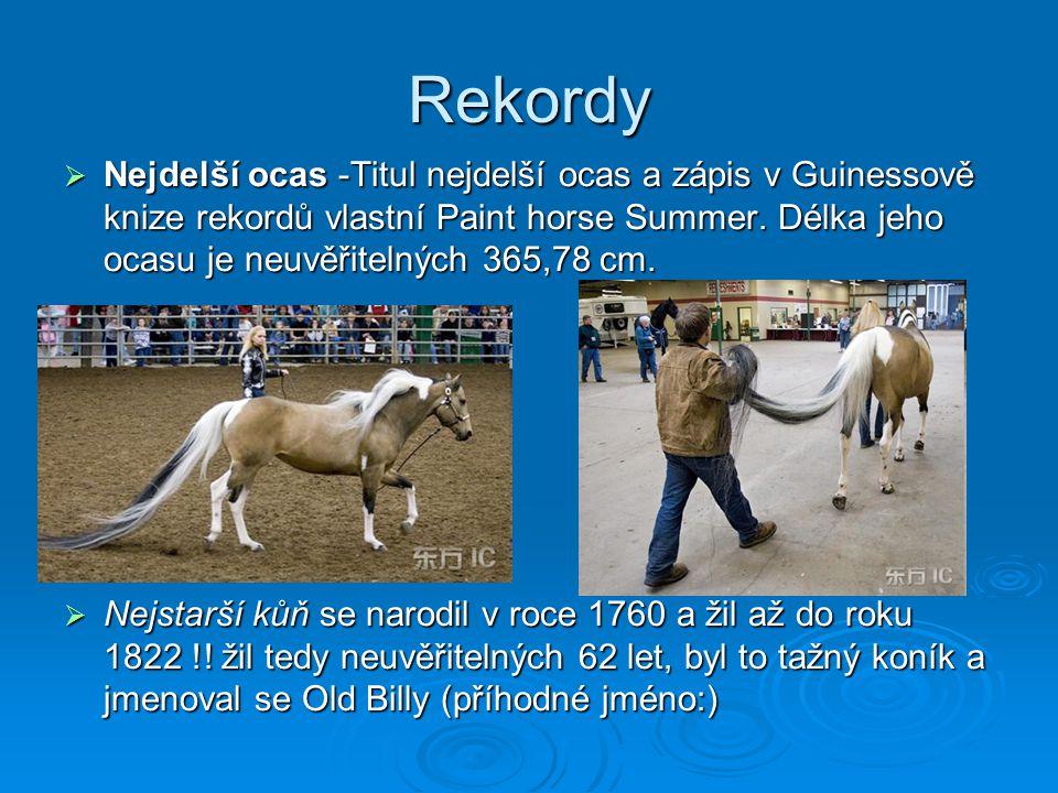 Rekordy  Nejdelší ocas -Titul nejdelší ocas a zápis v Guinessově knize rekordů vlastní Paint horse Summer.