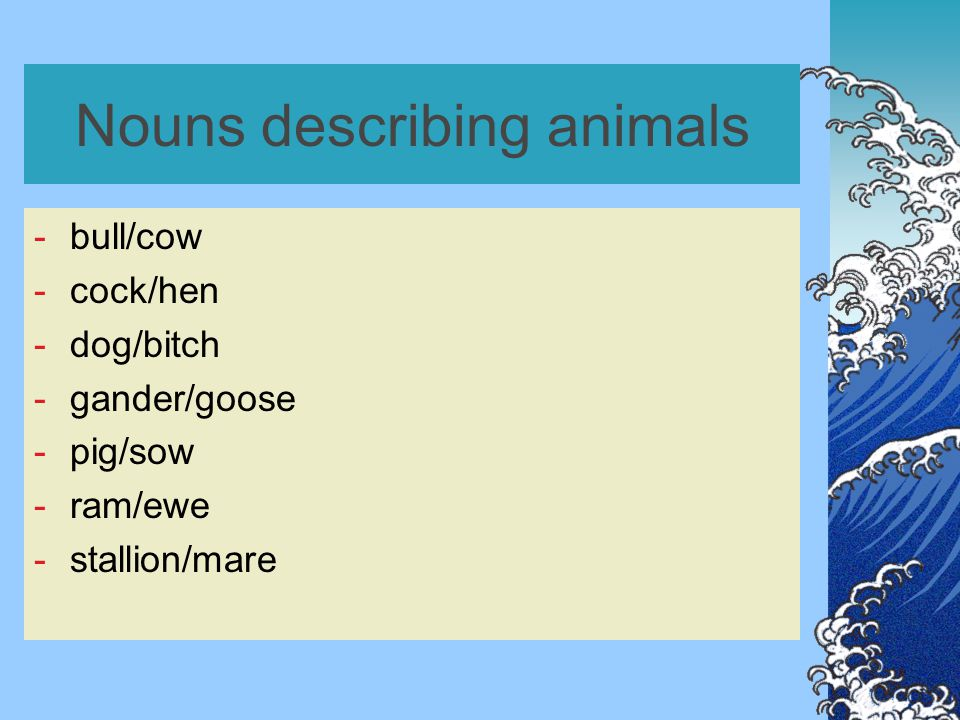 Nouns describing animals -bull/cow -cock/hen -dog/bitch -gander/goose -pig/sow -ram/ewe -stallion/mare