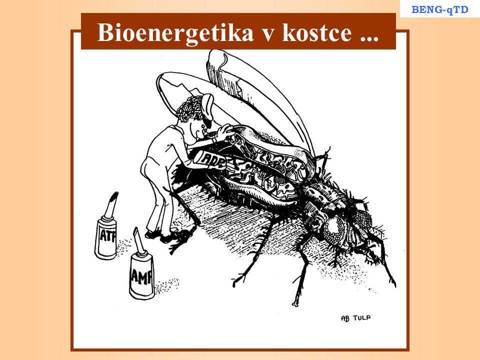 BENG-qTD Bioenergetika v kostce...