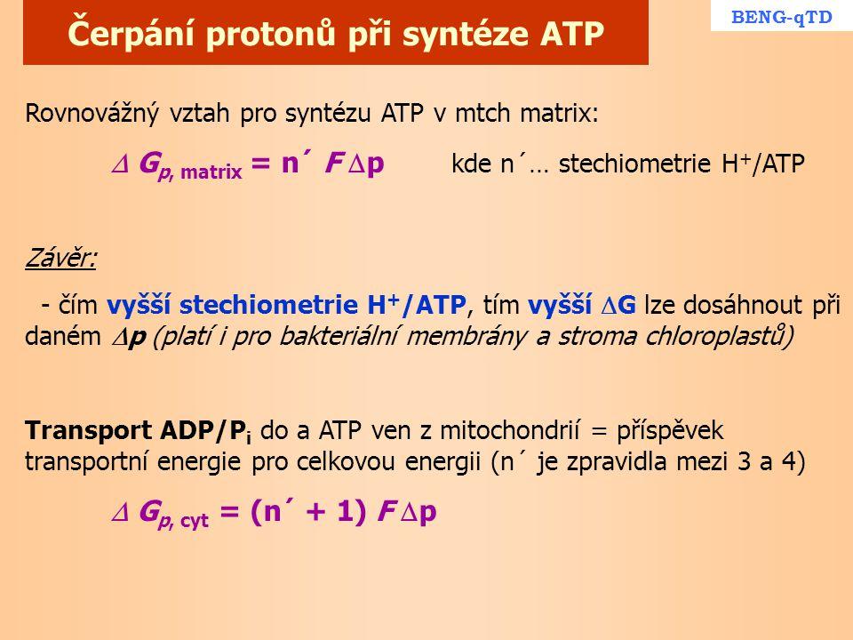Čerpání protonů při syntéze ATP Rovnovážný vztah pro syntézu ATP v mtch matrix:  G p, matrix = n´ F  p kde n´… stechiometrie H + /ATP Závěr: - čím v