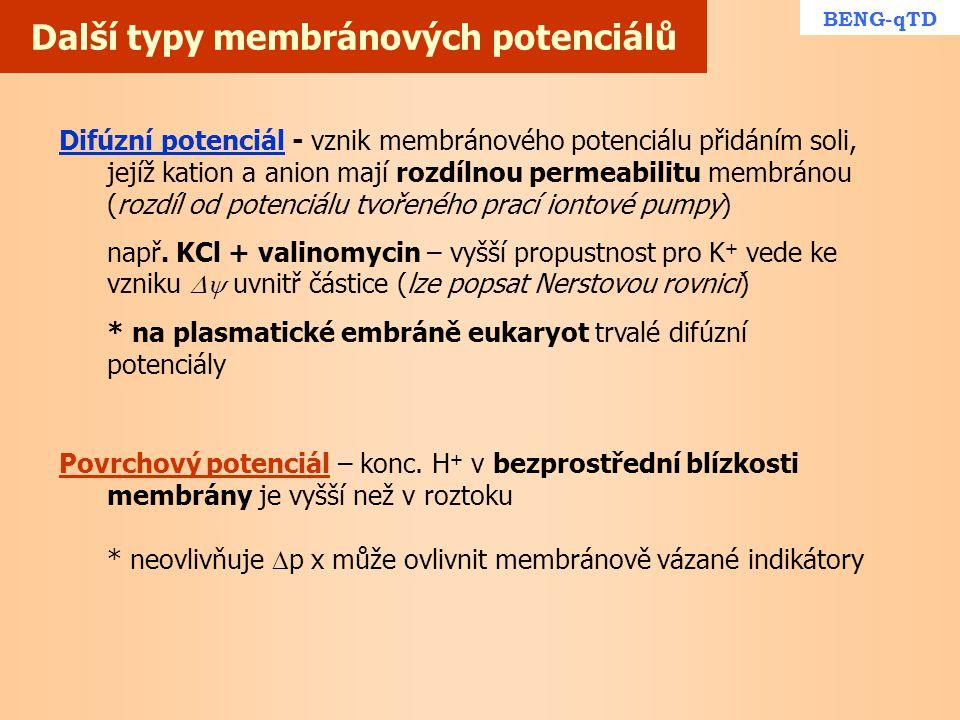 Další typy membránových potenciálů BENG-qTD Difúzní potenciál - vznik membránového potenciálu přidáním soli, jejíž kation a anion mají rozdílnou perme