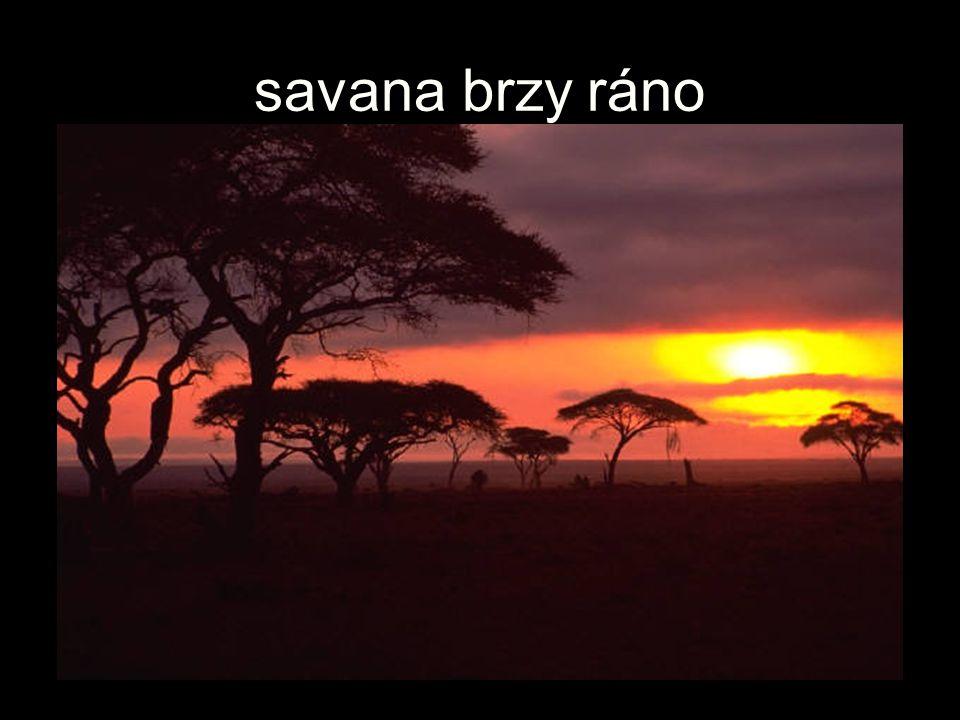savana brzy ráno