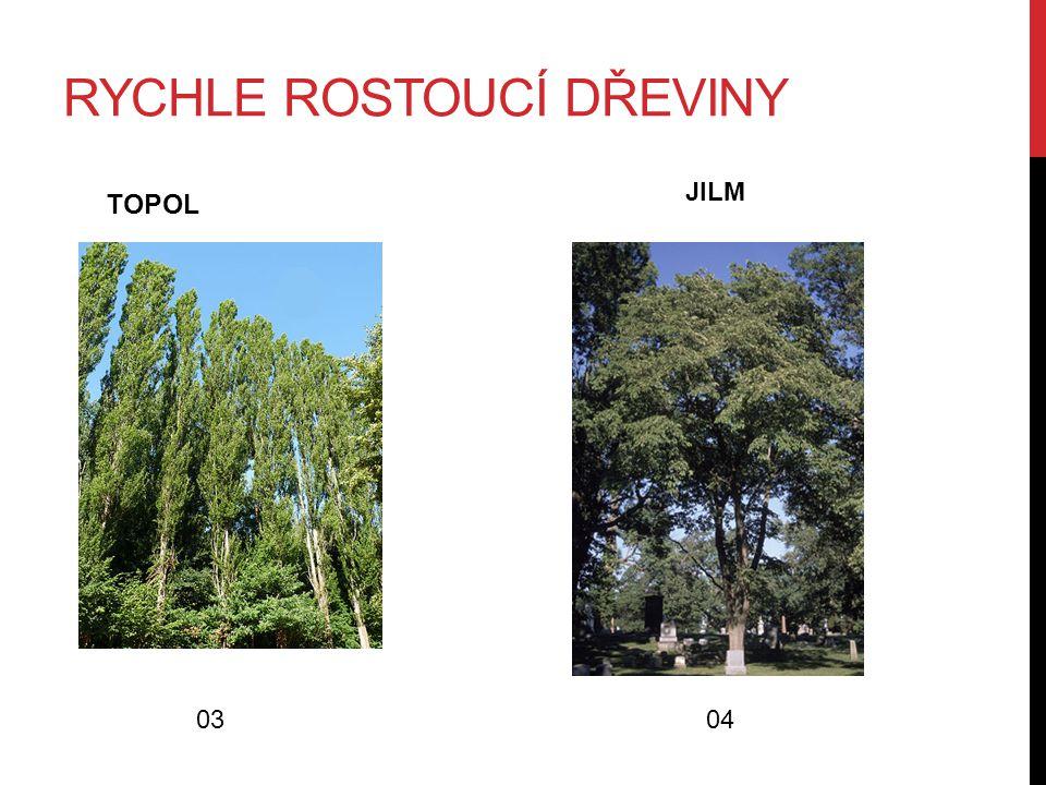 RYCHLE ROSTOUCÍ DŘEVINY TOPOL 0304 JILM