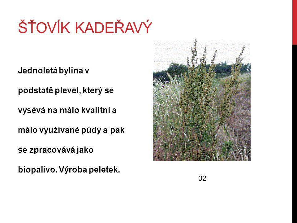 ŠŤOVÍK KADEŘAVÝ Jednoletá bylina v podstatě plevel, který se vysévá na málo kvalitní a málo využívané půdy a pak se zpracovává jako biopalivo.
