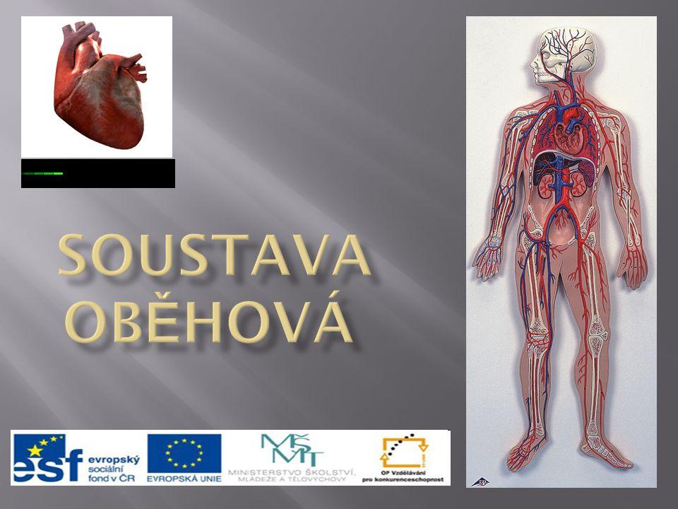  cévní soustava - slouží k transportu živin, plynů a odpadních látek z tkání nebo do tkání  krevní oběh zprostředkovávají cévy a srdce  cévy - trubice, v kterých proudí krev, tvoří uzavřený systém  srdce - aktivní čerpadlo, přečerpává krev do jednotlivých částí cévního systému