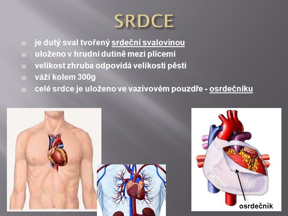  je dutý sval tvořený srdeční svalovinou  uloženo v hrudní dutině mezi plícemi  velikost zhruba odpovídá velikosti pěsti  váží kolem 300g  celé s