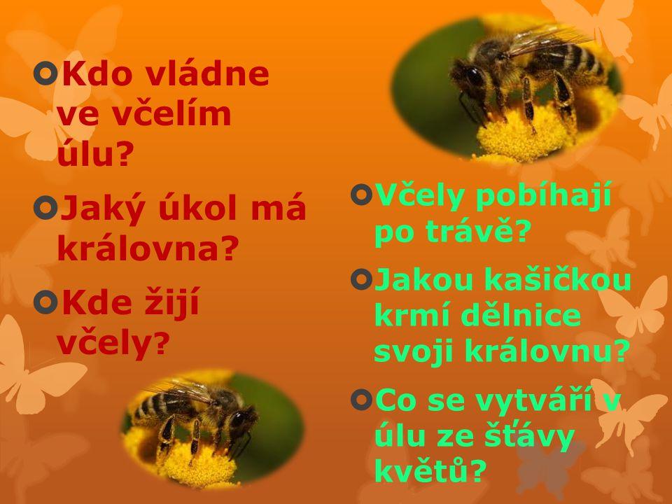  Kdo vládne ve včelím úlu?  Jaký úkol má královna?  Kde žijí včely ?  Včely pobíhají po trávě?  Jakou kašičkou krmí dělnice svoji královnu?  Co