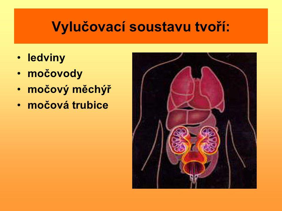ledviny močovody močový měchýř močová trubice