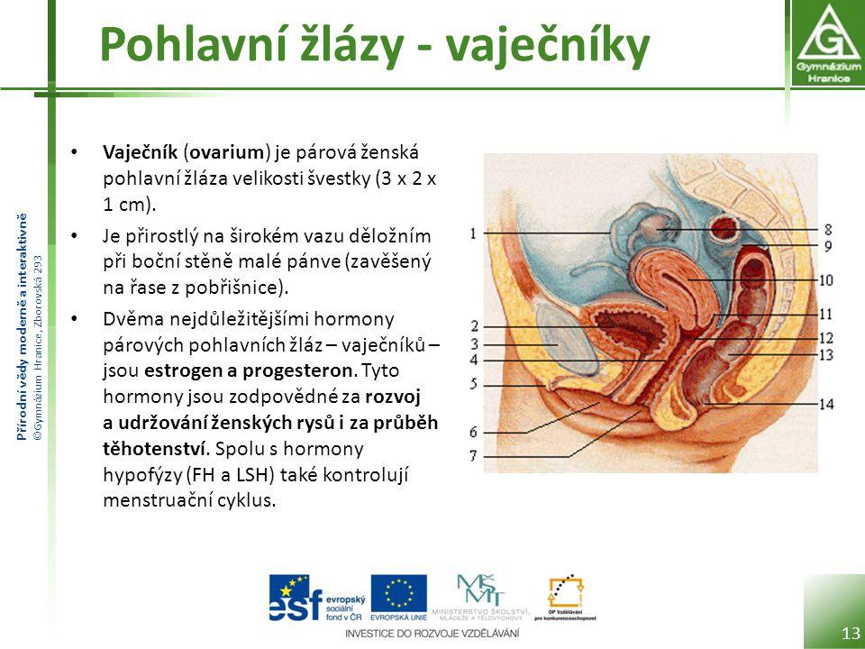Přírodní vědy moderně a interaktivně ©Gymnázium Hranice, Zborovská 293 Pohlavní žlázy - vaječníky Vaječník (ovarium) je párová ženská pohlavní žláza velikosti švestky (3 x 2 x 1 cm).