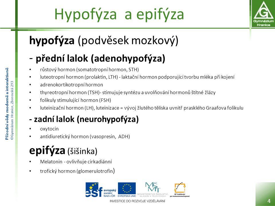 Přírodní vědy moderně a interaktivně ©Gymnázium Hranice, Zborovská 293 Hypofýza a epifýza hypofýza (podvěsek mozkový) - přední lalok (adenohypofýza) růstový hormon (somatotropní hormon, STH) luteotropní hormon (prolaktin, LTH) - laktační hormon podporující tvorbu mléka při kojení adrenokortikotropní hormon thyreotropní hormon (TSH)- stimujuje syntézu a uvolňování hormonů štítné žlázy folikuly stimulující hormon (FSH) luteinizační hormon (LH), luteinizace = vývoj žlutého tělíska uvnitř prasklého Graafova folikulu - zadní lalok (neurohypofýza) oxytocin antidiuretický hormon (vasopresin, ADH) epifýza (šišinka) Melatonin - ovlivňuje cirkadiánní trofický hormon (glomerulotrofin ) 4