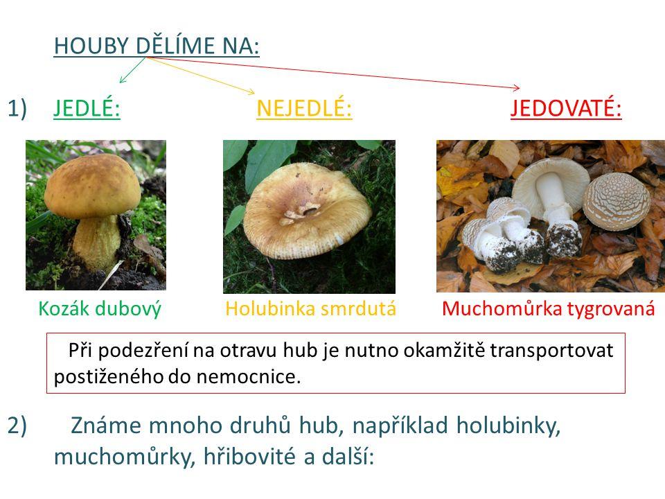 HOUBY DĚLÍME NA: JEDLÉ:NEJEDLÉ:JEDOVATÉ: Kozák dubovýHolubinka smrdutáMuchomůrka tygrovaná 1) 2) Známe mnoho druhů hub, například holubinky, muchomůrk