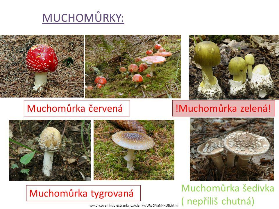 HŘIBOVITÉ HOUBY: ww.urcovanihub.estranky.cz/clanky/URcOVaNi-HUB.html Začátečníci v houbaření by se měli omezit na sběr hřibovitých hub, jejich určení je jednodušší, není zde tolik jedovatých druhů.