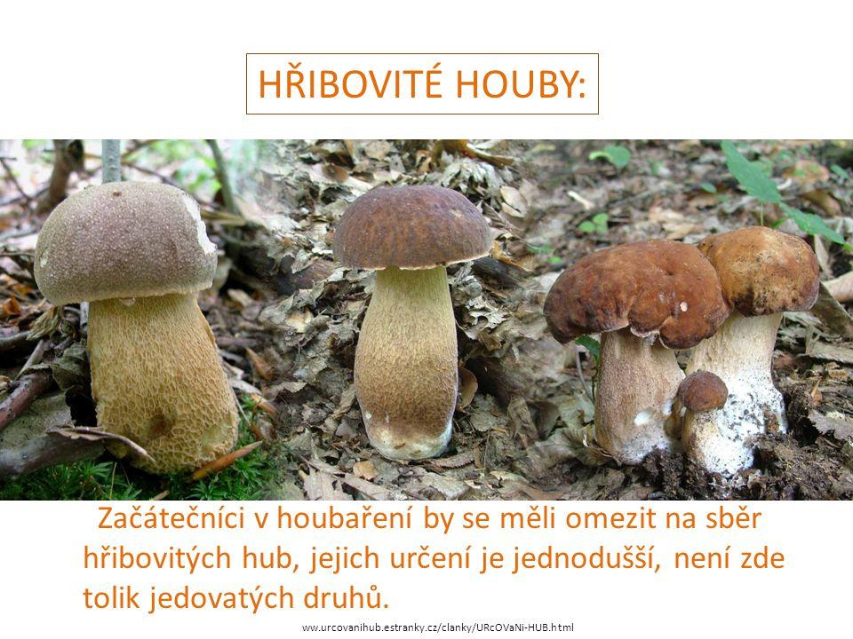 HŘIBOVITÉ HOUBY: ww.urcovanihub.estranky.cz/clanky/URcOVaNi-HUB.html Začátečníci v houbaření by se měli omezit na sběr hřibovitých hub, jejich určení