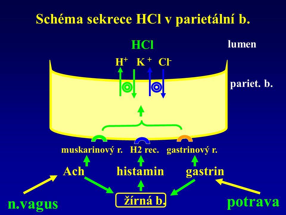 Schéma sekrece HCl v parietální b. H + K + Cl - HCl muskarinový r. H2 rec. gastrinový r. Ach histamin gastrin žírná b. n.vagus pariet. b. lumen potrav