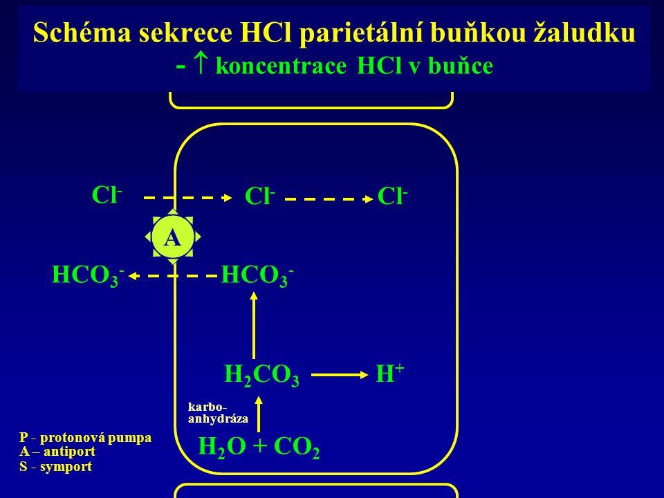 Schéma sekrece HCl parietální buňkou žaludku -  koncentrace HCl v buňce A Cl - HCO 3 - H 2 CO 3 H 2 O + CO 2 karbo- anhydráza H+H+ P - protonová pump