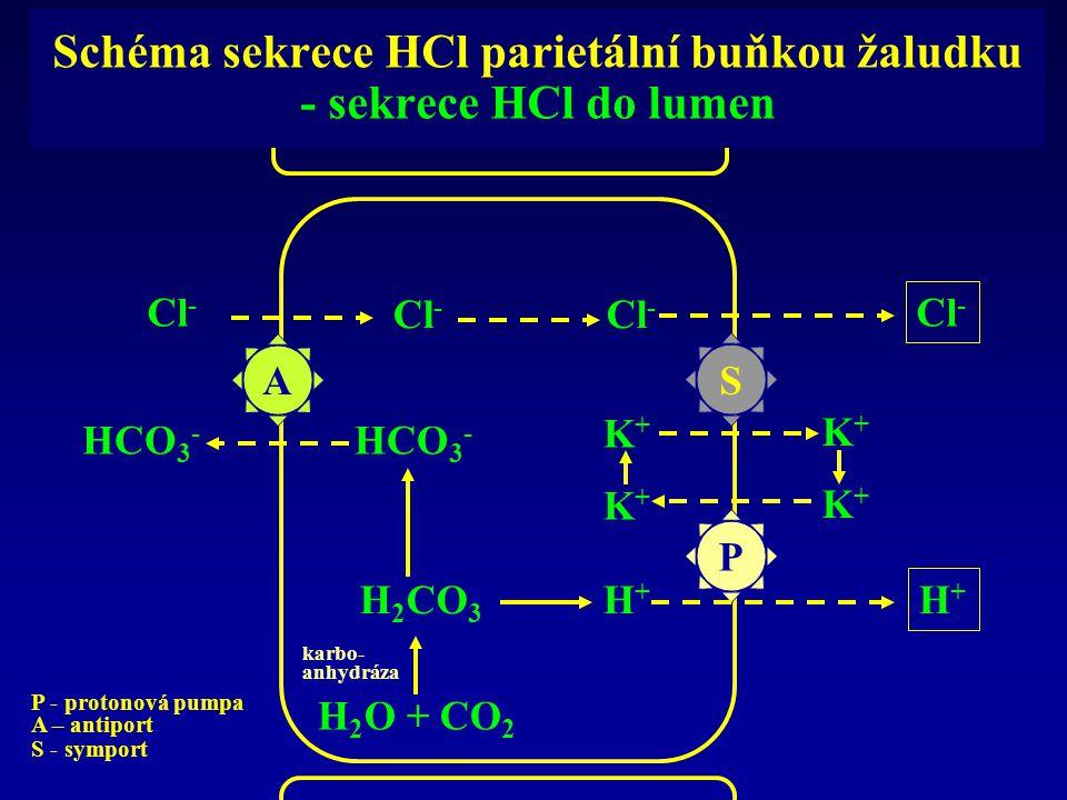 Schéma sekrece HCl parietální buňkou žaludku - sekrece HCl do lumen A S P Cl - HCO 3 - H 2 CO 3 H 2 O + CO 2 karbo- anhydráza H+H+ H+H+ K+K+ K+K+ K+K+