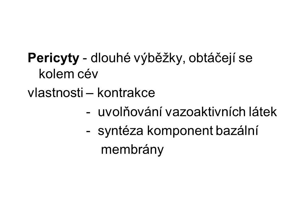 Pericyty - dlouhé výběžky, obtáčejí se kolem cév vlastnosti – kontrakce - uvolňování vazoaktivních látek - syntéza komponent bazální membrány