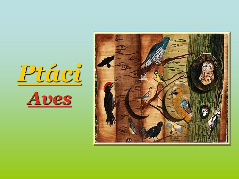 Ptáci Aves