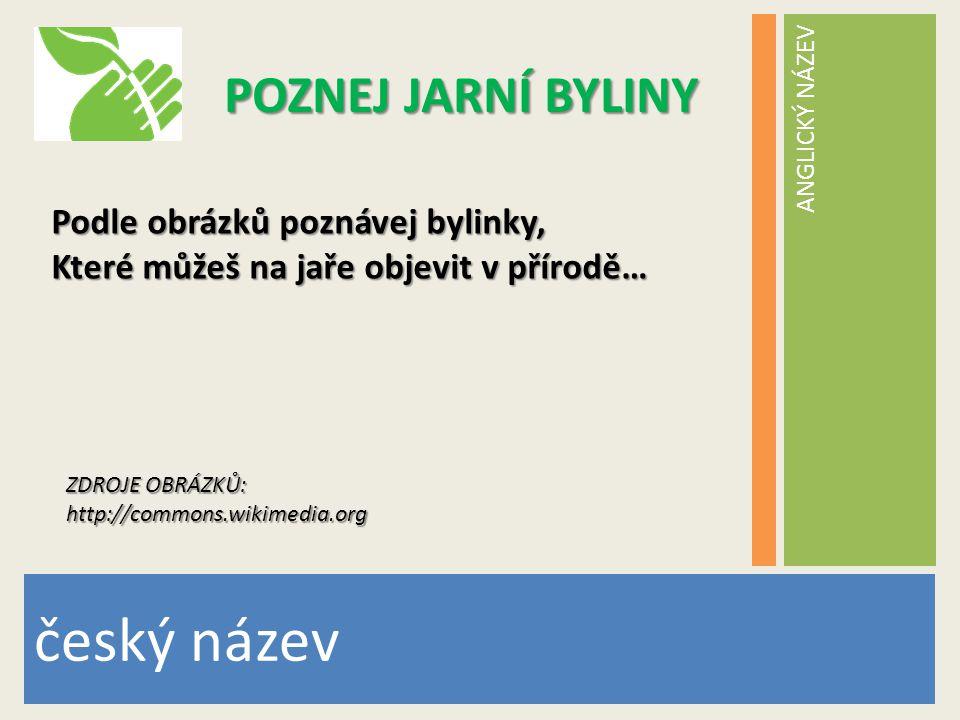 ANGLICKÝ NÁZEV český název POZNEJ JARNÍ BYLINY Podle obrázků poznávej bylinky, Které můžeš na jaře objevit v přírodě… ZDROJE OBRÁZKŮ: http://commons.w